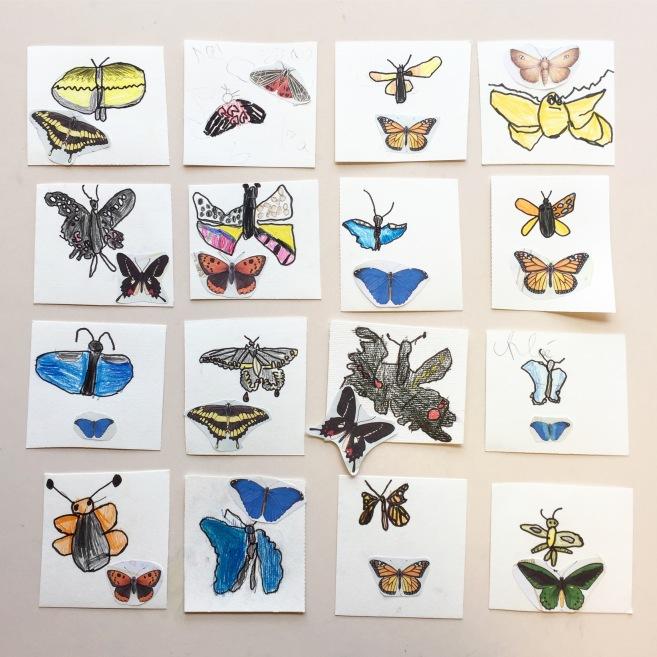 Projet d'école maternelle dessin papillon